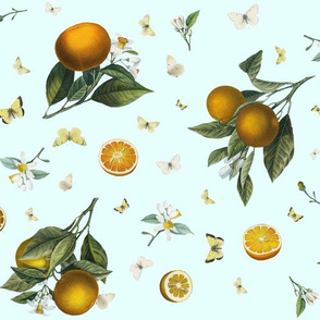 Oranges and White Butterflies on Robinshell Blue