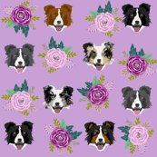 Rborder_collie_custom_purple_shop_thumb