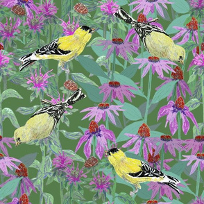 bee_balm_and_cone_flowers_and_gold_finches_off_set_G
