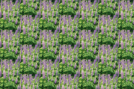 LUPINEPATCH-SPOKANE--HALF-DROP fabric by karenspix on Spoonflower - custom fabric