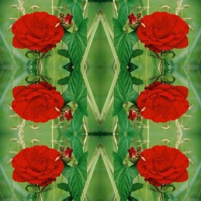 RED_ROSE-SMALL