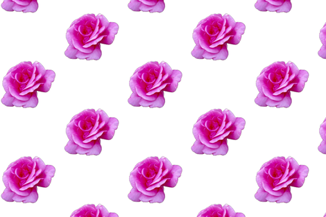 Bright Pink Rose fabric by coastrockworkshop on Spoonflower - custom fabric