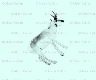 Deer on Mint