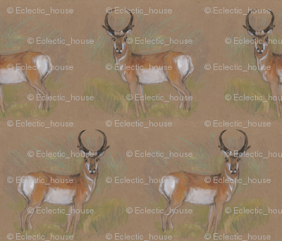 Rpronghorn_antelope_buck_preview