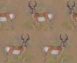 Rpronghorn_antelope_buck_thumb