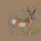 Pronghorn Antelope for Pillow