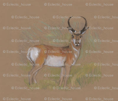 Rpronghorn_antelope_for_pillow_3_preview