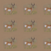 Pronghorn Antelope for Pillow