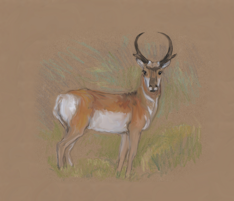 Pronghorn Antelope for Pillow fabric by eclectic_house on Spoonflower - custom fabric