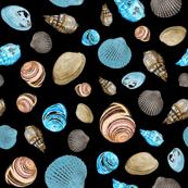 Shells on black