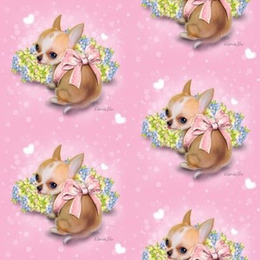 Chihuahua Baby pink M