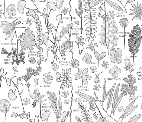 Collectors Colorbook Botanicals fabric by mypetalpress on Spoonflower - custom fabric