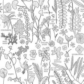Colorbook Botanicals