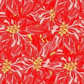 Poinsettias pop Christmas