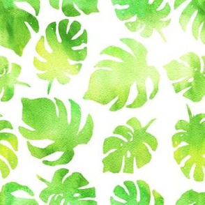 Monstera palm leaf watercolor