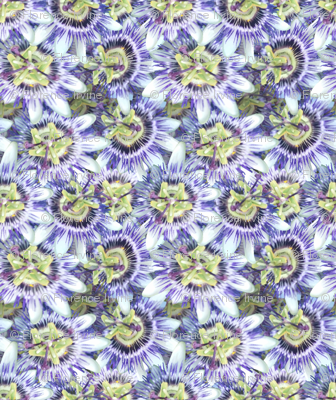Small Passionflower Spread
