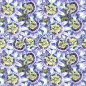 Rpassionflower2_shop_thumb