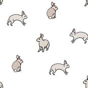 grey_rabbits_on_white