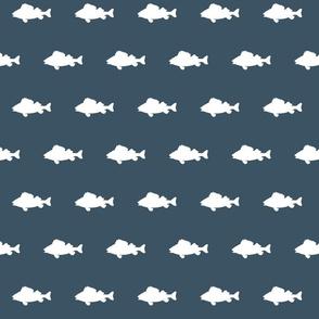 fish run on slate