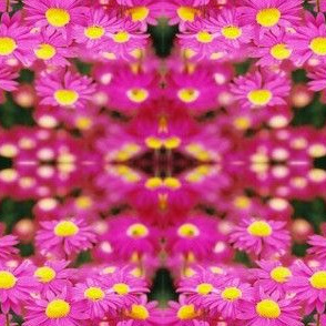 PINK_PAINTED_DAISIES-MIRRORED