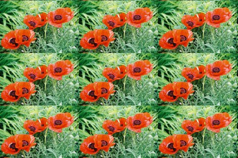 Rred_poppies_2-placemat_shop_preview