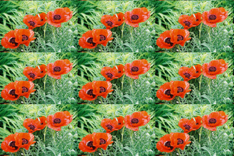 RED_POPPIES_2-PLACEMAT fabric by karenspix on Spoonflower - custom fabric