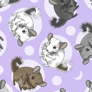 Chinchillas and moon dots - large purple