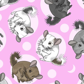 Chinchillas and moon dots - large pink