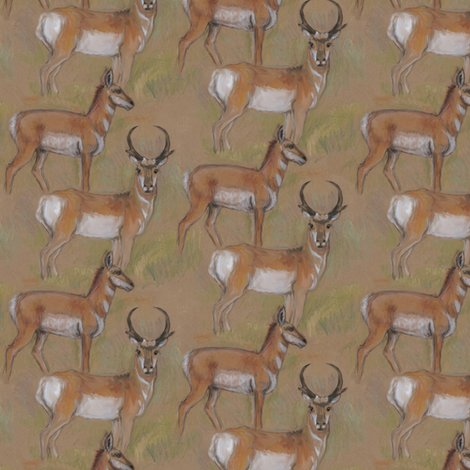 Rpronghorn_antelope_buck_and_doe_shop_preview