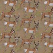 Rpronghorn_antelope_buck_and_doe_shop_thumb
