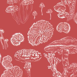 Mushrooms Toadstool Red