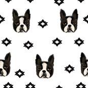 Rboston_terriers_2_shop_thumb