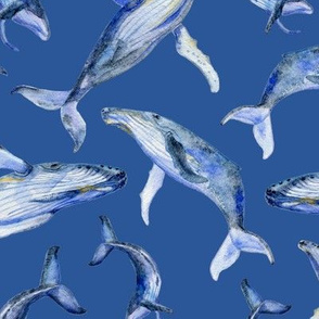 humpback whale dance (blue)