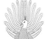 Rpeacock_thumb