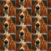 Rbasset_hound_for_fabric_shop_thumb