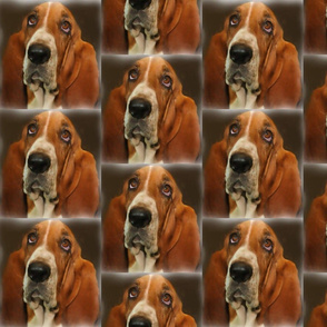 Baset Hound Portrait
