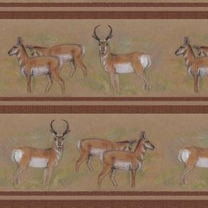 Pronghorn Antelope Stripe