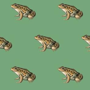 leopard frog, green