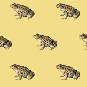 leopard frog, yellow