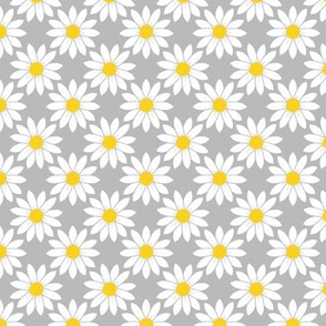 Daisies in Gray