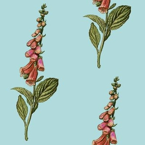 foxglove, lighter blue