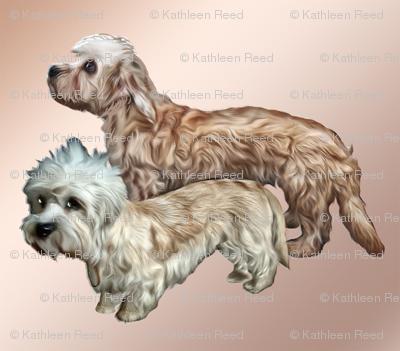 Two Dandie Dinmont Terriers
