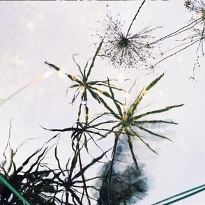AQUATIC_LEAF_REFLECTIONS-PLACEMATS