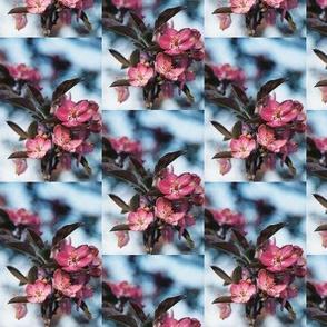 CRABAPPLE_BLOSSOMS--HALF-DROP