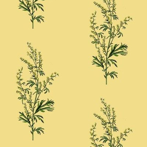 wormwood, yellow