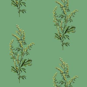 wormwood, green