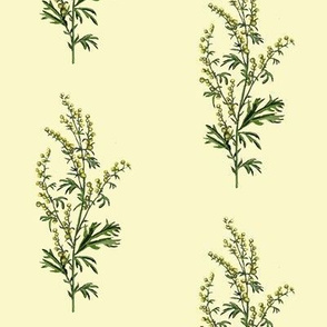 wormwood, cream