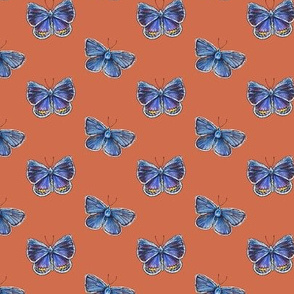 karner blue butterfly, red