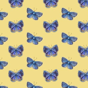 karner blue butterfly, yellow