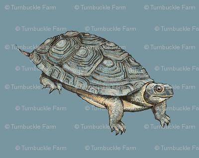 wood turtle, blue